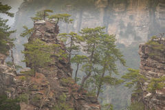 Wulingyuan mountain. In China ( Avatar mountain stock photography