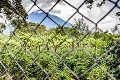 Wulkan & kawowa plantacja, Gwatemala Obrazy Royalty Free