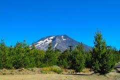 Wulkan Lonquimay w Chile Zdjęcia Stock