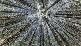 Wunder-Wald lizenzfreie stockbilder