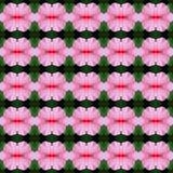 Wunderbar von der Blumenblatt Hibiscusblume nahtlos vektor abbildung
