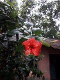 Wunderbare Blume mit it& x27; kleines Baby s Gerade ehrf?rchtig lizenzfreie stockfotos