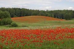 Wunderbare Farben des Sommerfeldes Lizenzfreie Stockfotos