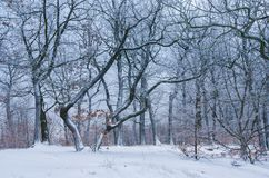 Wunderbare Formen von bloßen Bäumen im Winter lizenzfreie stockfotografie