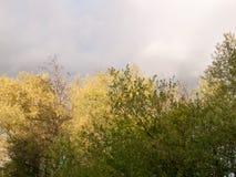 Wunderbare grüne und gelbe Wipfel gegen ein bewölktes und ein düster Lizenzfreies Stockbild