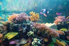 Wunderbare und schöne Unterwasserwelt mit Korallen und tropica lizenzfreie stockfotos