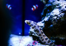 Wunderbare und sch?ne Unterwasserwelt mit Korallen und tropischen Fischen lizenzfreies stockfoto