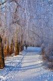 wunderbare Winterszene Stockfotografie