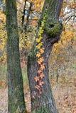 Wunderbare Wunder des Herbstes Lizenzfreies Stockbild