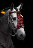 Wunderbarer andalusischer Hengst in der Pferdeshow Moskau Stockbilder