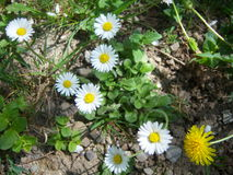 Wunderbarer Frühling Stockfoto