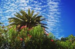 Wunderbarer gemalter Himmel mit einer Palme in der Front Stockfotos