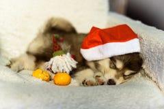Wunderbarer glücklicher Welpe Schlittenhund, hat roten Weihnachtshut Stockfoto