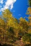 Wunderbarer Herbstwald Lizenzfreies Stockfoto