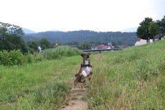 Wunderbarer Hund Stockbilder
