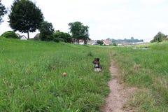 Wunderbarer Hund Stockfoto
