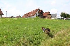 Wunderbarer Hund Stockbild