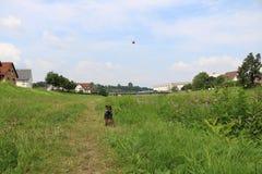 Wunderbarer Hund Lizenzfreie Stockfotografie