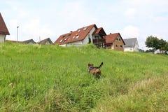Wunderbarer Hund Stockfotos