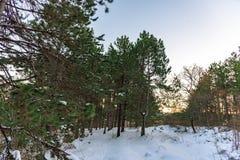 Wunderbarer orange Sonnenuntergang im immergrünen Kiefernwald und kleiner Halbmond im blauen Himmel Russland, Stary Krym Schöner  Stockbild