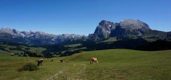 Wunderbarer Panoramablick von alp de Siusi mit berühmter langkofel Gruppe Stockfotografie