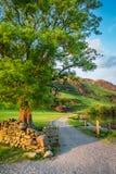 Wunderbarer Sonnenuntergang am See mit großem Baum im District See Stockbild
