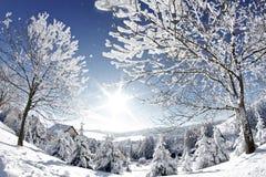 Wunderbarer Winter lizenzfreie stockfotos