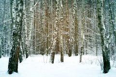 Wunderbarer Winterwald Stockfotos