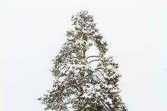 Wunderbarer Winterwald wird mit Schnee bedeckt Lizenzfreies Stockbild
