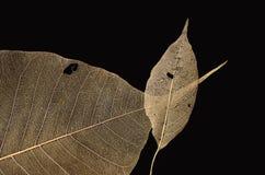 Wunderbares Adermuster von Blättern Lizenzfreie Stockfotos