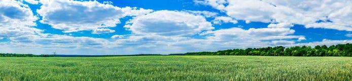 Wunderbares grünes Feld bis zum Frühlingszeit Lizenzfreie Stockbilder