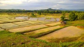 Wunderbares Reisfeld in Thailand Stockbild