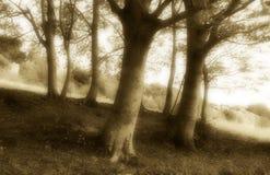 Wunderbares Unterholz, altmodische Sepiafarbe Stockfotos