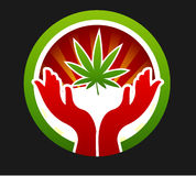 Wunderblatt des Marihuanas Stockfoto