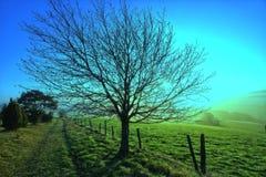 Wunderful drzewo obrazy royalty free