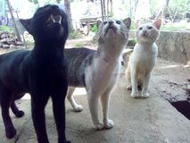 Wunderkatzen Lizenzfreies Stockfoto