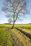 Wunderlich geformter gekrümmter Baum im winterlichen Sonnenlicht Stockfotografie