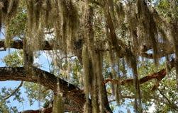 Wunderliche Bäume Lizenzfreie Stockfotografie