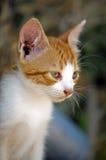 Wundernde Augen! Lizenzfreie Stockbilder