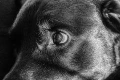 Wundernder Hund mit großen Augen stockbild