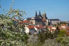 Petrin-Hill Laurenziberg , Prague, Czech Republikm Spring, Veitsdom, white Blossoms stock photos