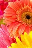 Wundervolle Blumen Stockfotografie