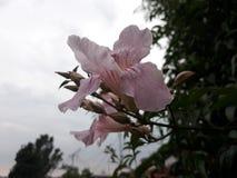 Wundervolle Blumen Lizenzfreie Stockfotografie