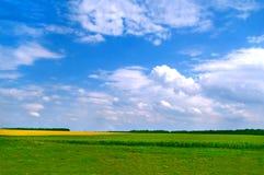 Wundervolle Feldlandschaft Stockbilder
