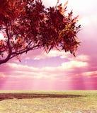 Wundervolle Herbstlandschaft Stockbilder