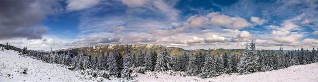 Wundervolle Winterlandschaft Panorama - Schnee bedeckte Alpenkiefer und blauen perfekten Himmel Stockfotografie