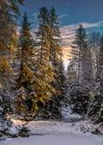 Wundervolle Winterlandschaft Schnee bedeckte Kiefer über dem moun Lizenzfreie Stockbilder