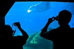 Wundervolles Aquarium Stockfoto