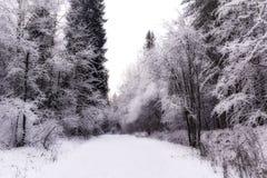 Wunderwinterwald bedeckt durch Schnee Stockbild