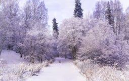 Wunderwinterwald bedeckt durch Schnee Stockfotos